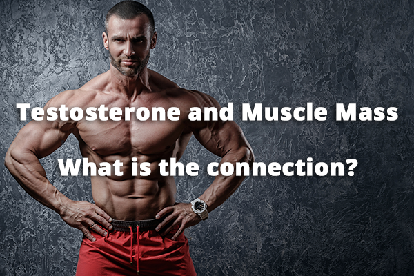 testosterone-and-muscle-mass